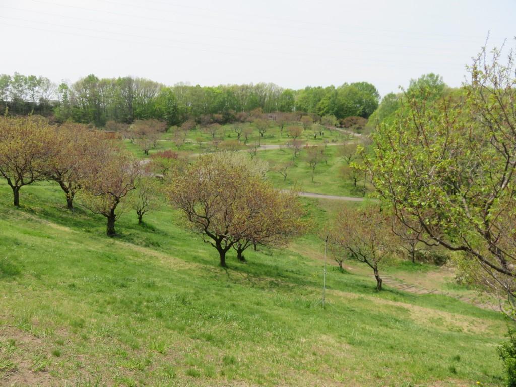 公園に広がる木たち