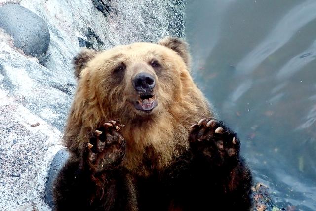 住宅街にも来るクマに要注意ですよ!