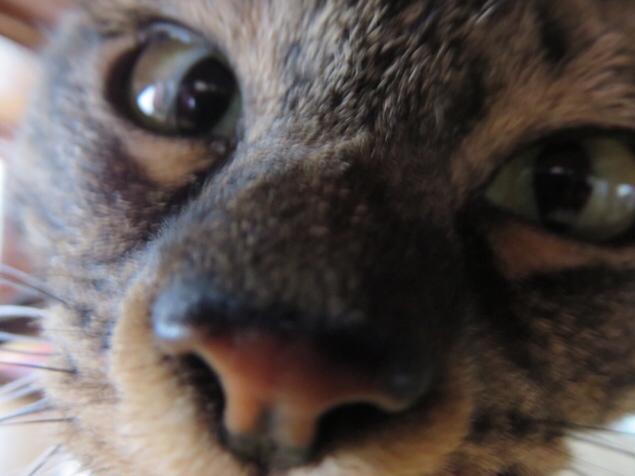 保護された猫と触れ合えるCAFE