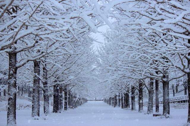 札幌のあるあるネタ、冬ver.をまとめてみました