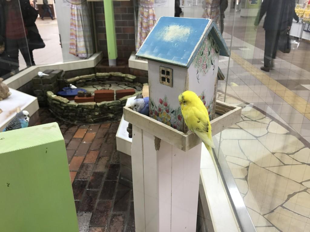 小鳥のひろばにいた黄色のインコ