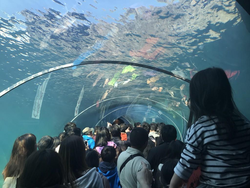 水中トンネルの中にいる人たち