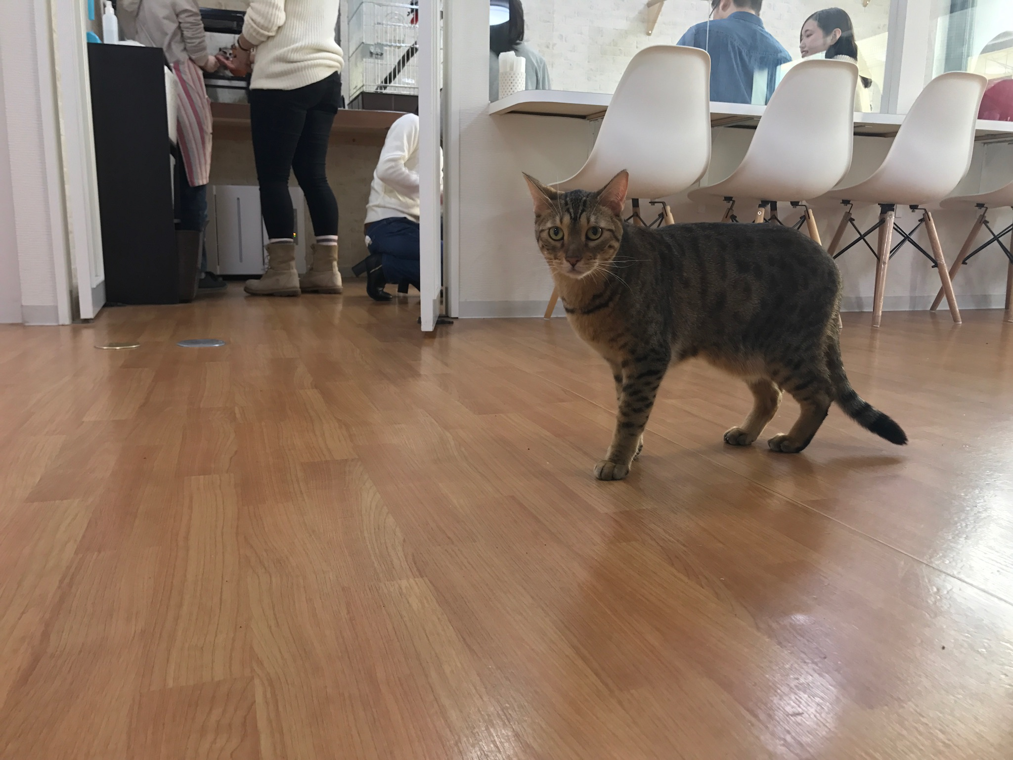 店内を歩くネコ