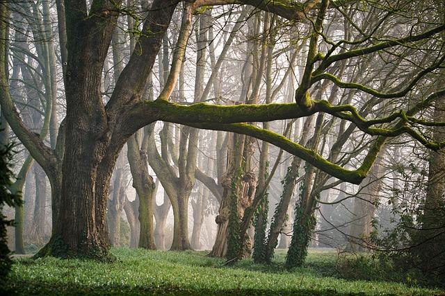 自然の中の森林