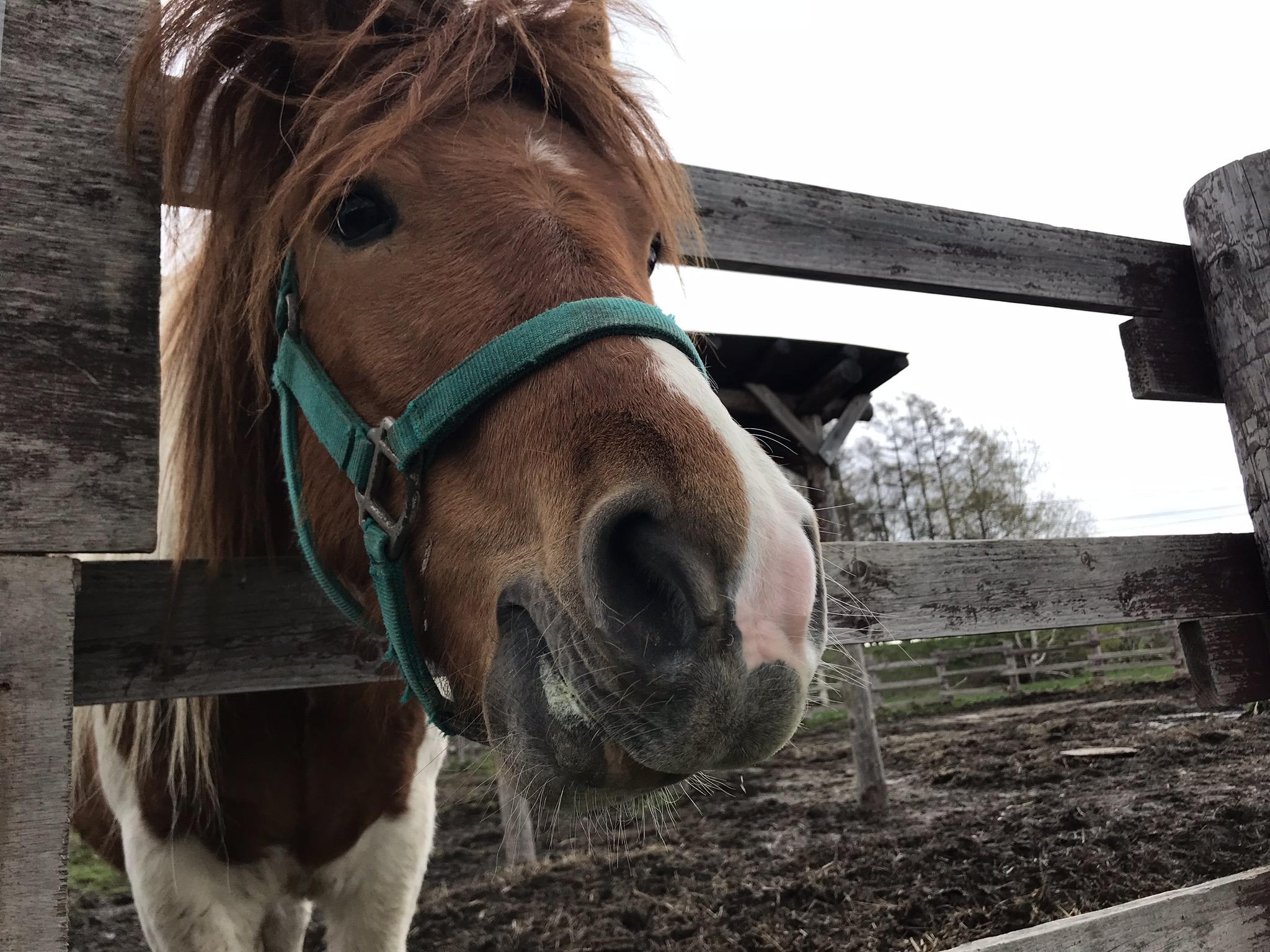 えさを食べる馬