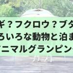 日本初!動物と一緒に泊まれる『アニマルグランピング』がノースサファリサッポロでできるぞ!