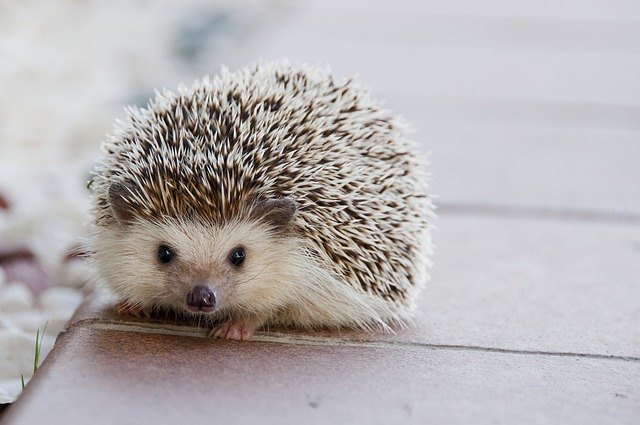 【9/22】大丸札幌でプチ動物園が開園!ハリネズミなどの小動物をふれあい体験ができますよ!