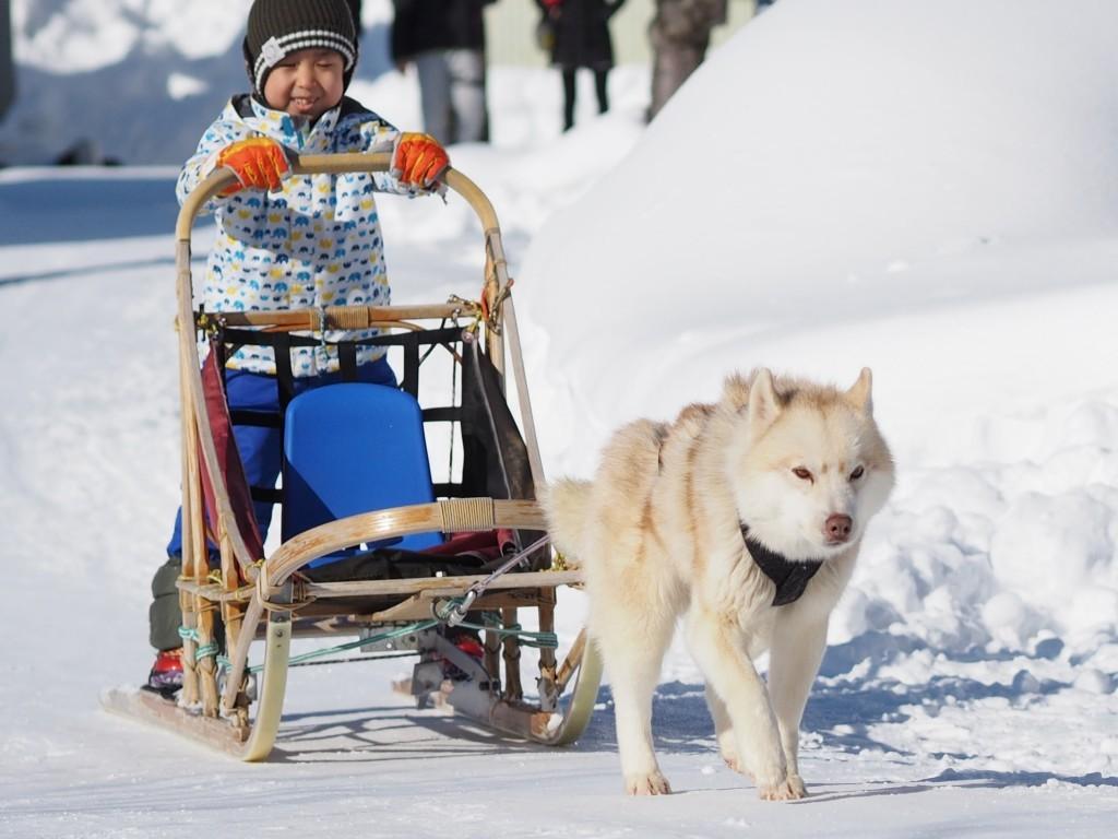 定山渓で冬のアクティビティ 雪三舞が開催!犬ぞりやスノーラフティングが楽しめるぞ!