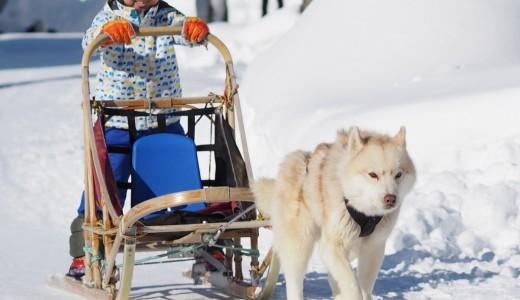 南区の八剣山果樹園で冬のアクティビティ 雪三舞が開催!犬ぞりやスノーラフティングが楽しめるぞ!