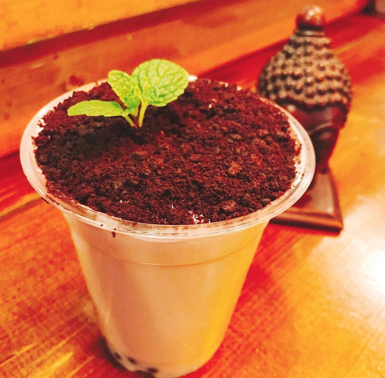 パフェデルマーの盆栽タピオカミルクティー
