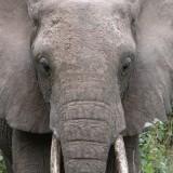 円山動物園にきたアジアゾウの名前が決定!厳選された10の候補から選ばれたのは・・・
