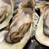 【2/15~17】厚岸のおいしいが集まる厚岸味覚まつりがサッポロファクトリーで開催!