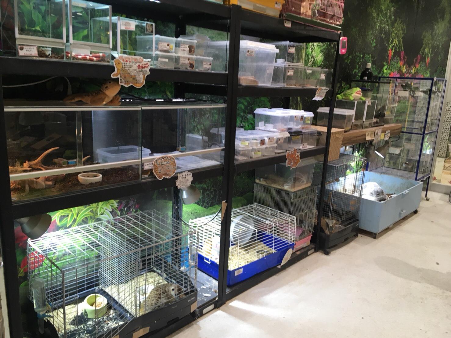 ゲージに入れられた動物たちがたくさん