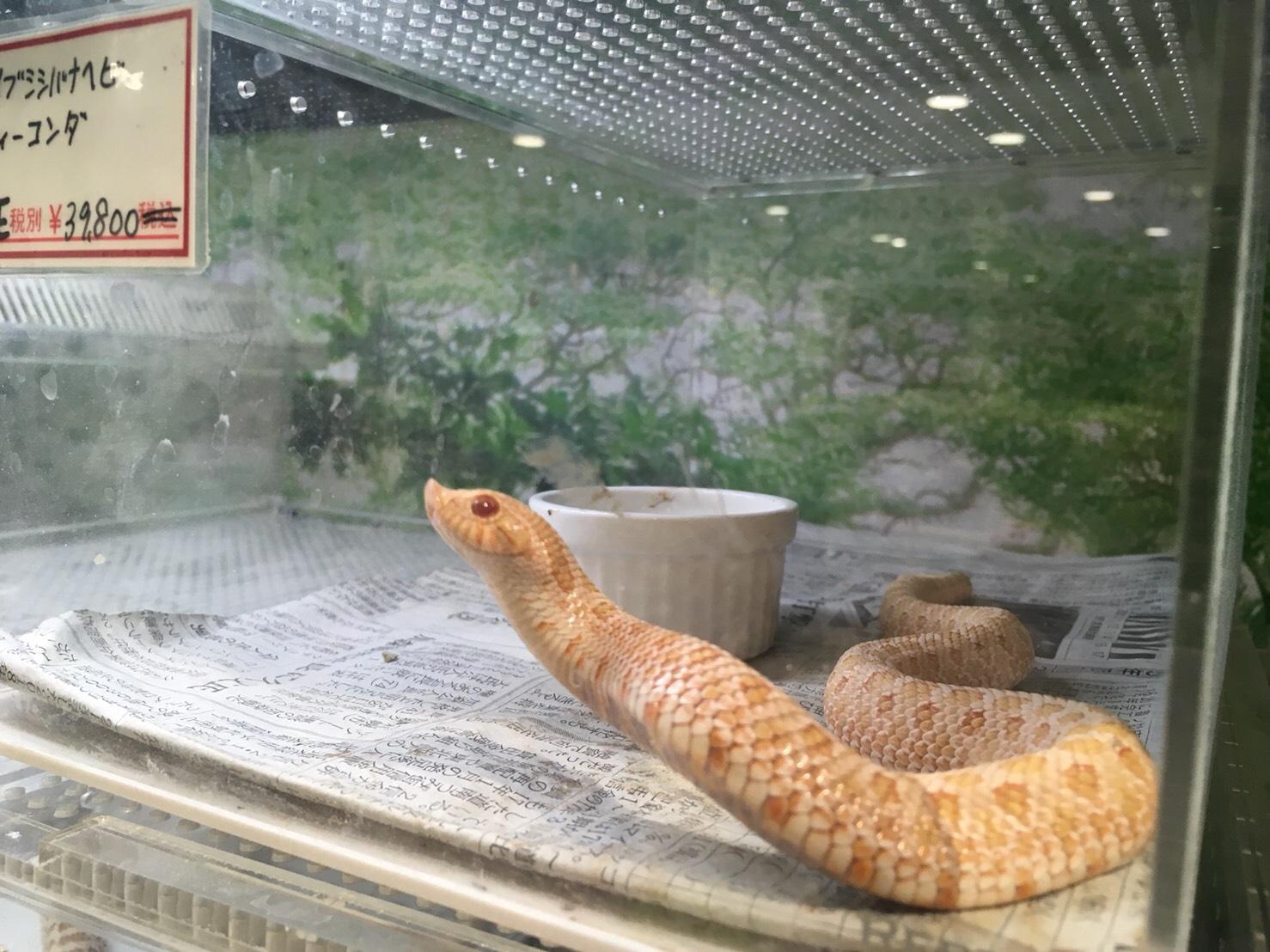 ヘビもうようよいる