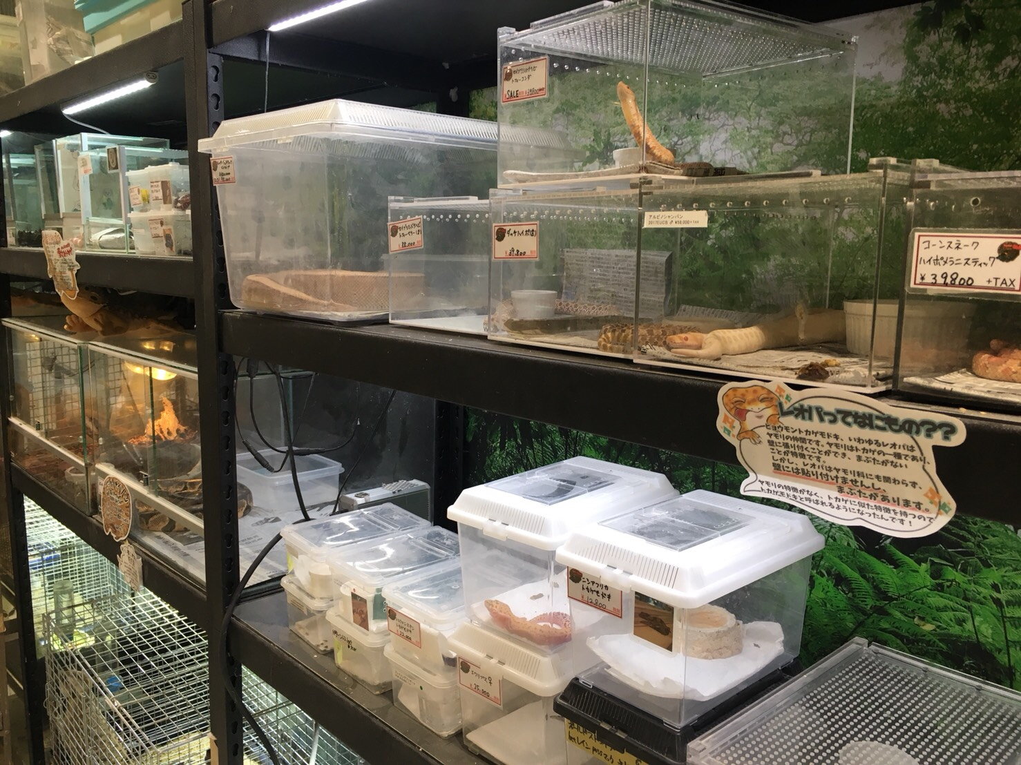 爬虫類系もたくさん取り揃えている