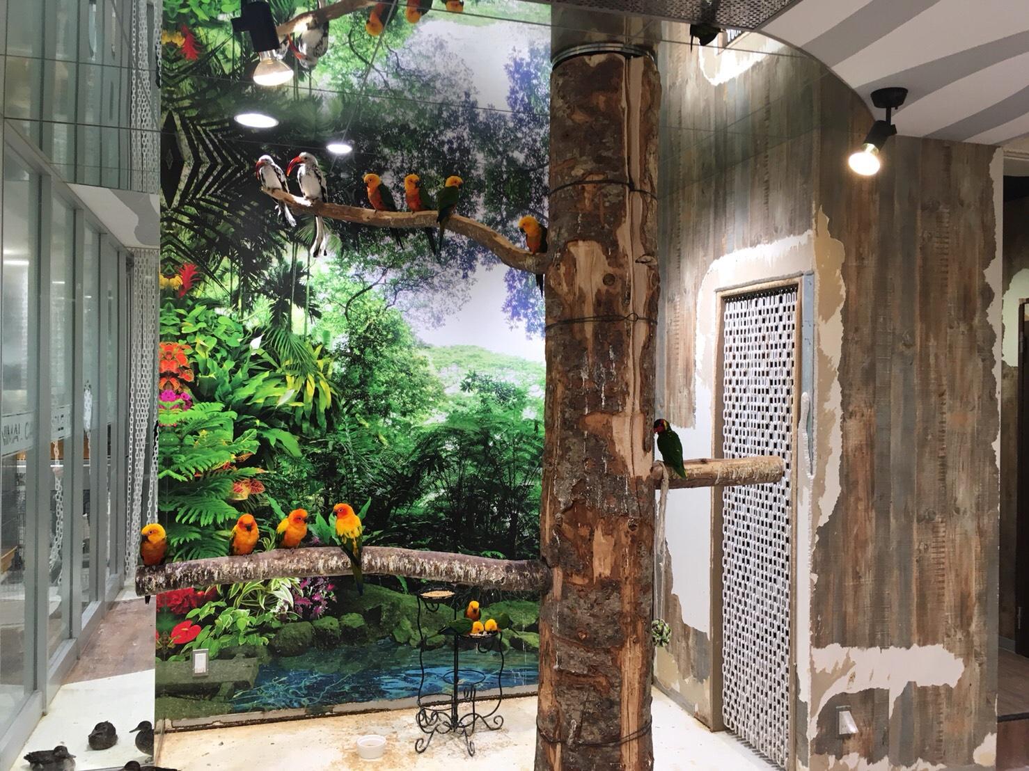トロピカル・ジェム 狸小路ジャンゴー店のインコ室