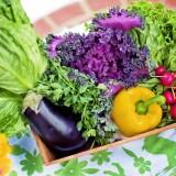 お弁当や惣菜を販売する大地ノ青果店がイオン桑園に2号店をオープン!