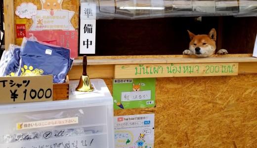 【犬のやきいも屋さん】世界初!?犬が店員さんのやきいも屋が清田区にあったぞ!