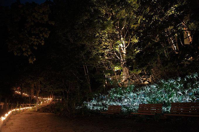 定山渓ネイチャールミナリエ 『JOZANKEI NATURE LUMINARIE ~SECRET NIGHT PARK~』のイルミネーション