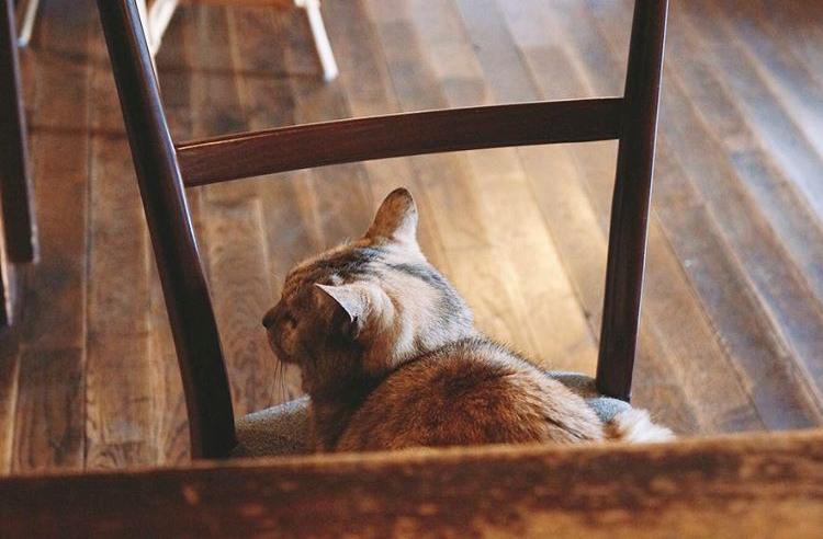 円山茶寮(まるやまさりょう)にいる看板猫