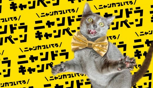 HDペットカメラが当たるかも!サツドラで猫商品を購入すると『ニャンズカード』がついてくる!
