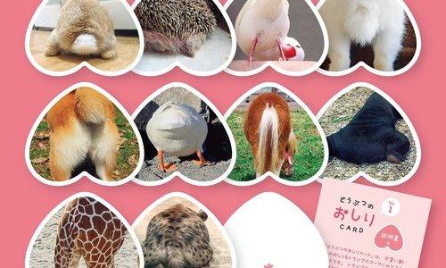 動物のおしりたちで遊ぶ『どうぶつのおしりCARD』が札幌パルコで販売中!