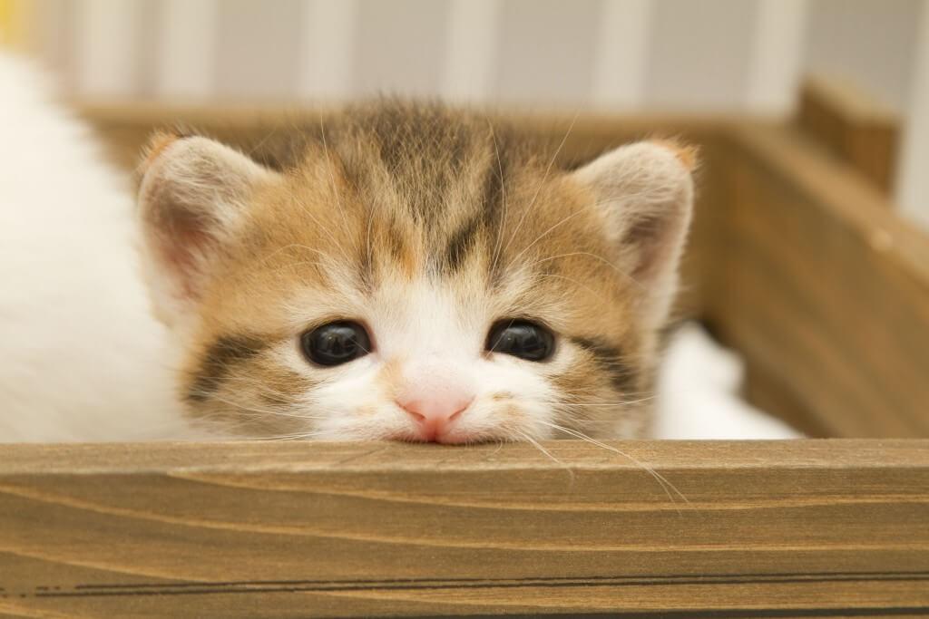 顔をひょっこりと覗かせる猫