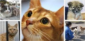 フェリシモ猫部のネコ達