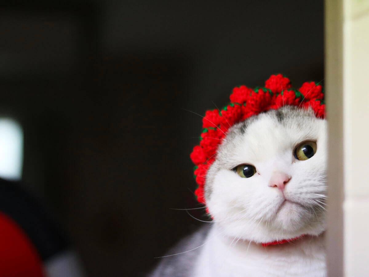 ねこのひょっこり展「苺のお帽子似合うかにゃ」