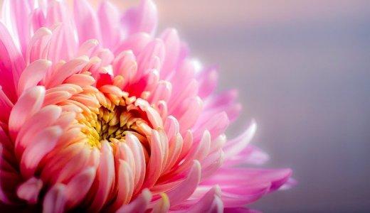 【フラワースペースグラベル・カフェバニラ】カフェ併設の花屋が大同生命札幌ビルにオープン!クレープやドリンクなど