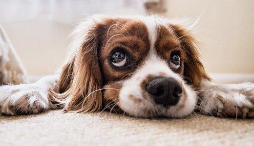 【犬のホテル カーネ】西区に完全個室のワンちゃん専用ホテルが誕生!スタッフも24時間常駐っ