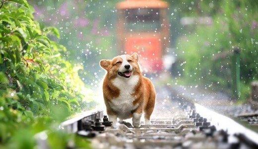 【1/2 Hounds(ワントゥハウンズ) 2号店】犬のリハビリ&フィットネスジムが石山通にオープン!