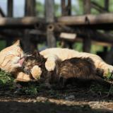 「劇場版 岩合光昭の世界ネコ歩き あるがままに、水と大地のネコ家族」の写真展が札幌三越で9月1日(水)より開催!ネコ写真・動画の応募も受付
