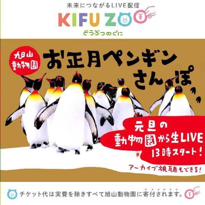『KIFU ZOO』-冬の風物詩「ペンギンのさんぽ」の様子