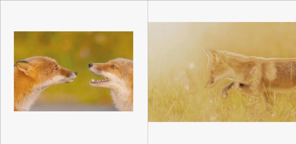 『Romantic Forest おとぎの森の動物たち』イメージ