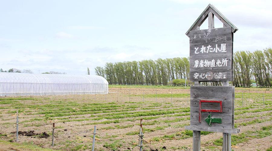 とれた小屋ふじい農場