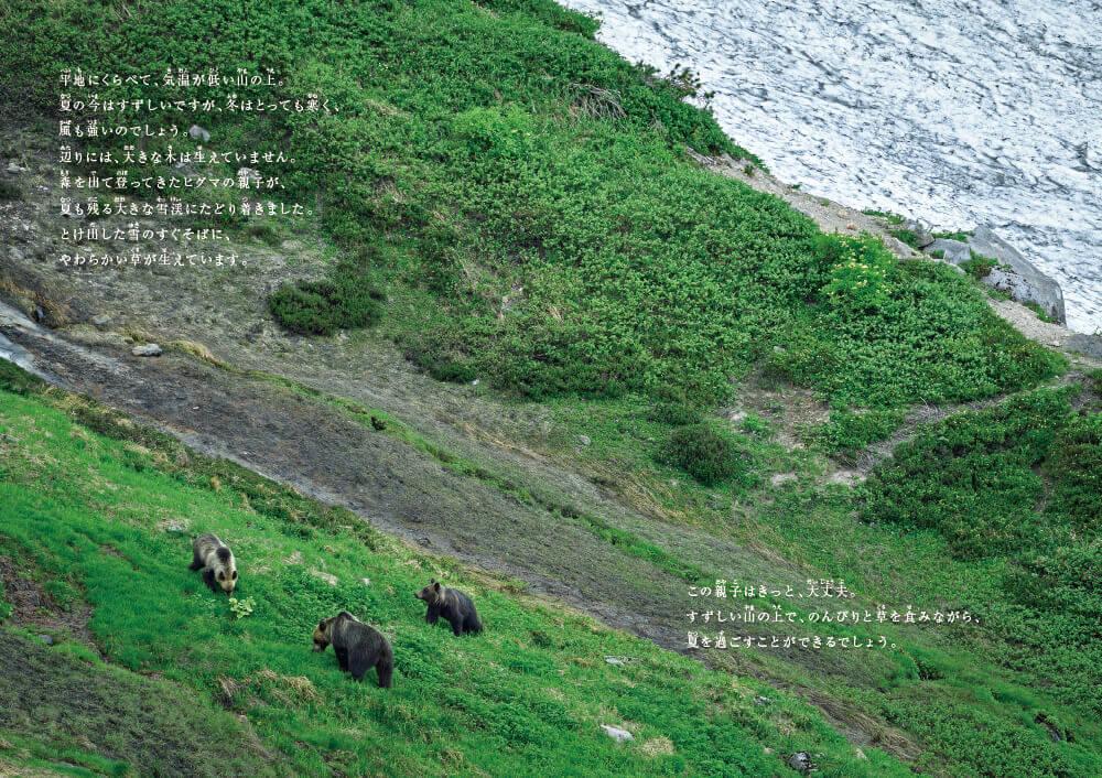 『命のつながり❶ 森と川、山と海 ヒグマの旅』